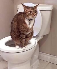 Zindelijkheid Bij Katten En Kittens