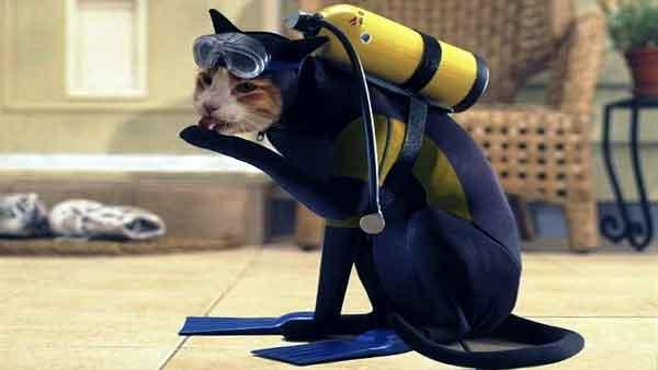 Kat gaat vissen vangen