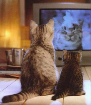 Cats porn movie